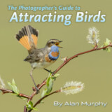 The Photographer's Guide to Attracting Birds