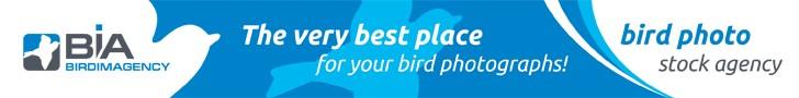 birdimagency.com