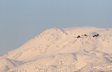 110904 - Common Crane (Grus grus) group in flight in front of snow-covered Mount Hermon, Israel