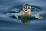 Common Seal