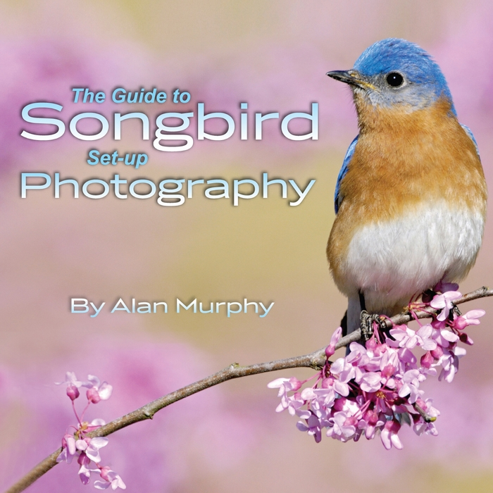 The Guide of Songbird Set-up Photography