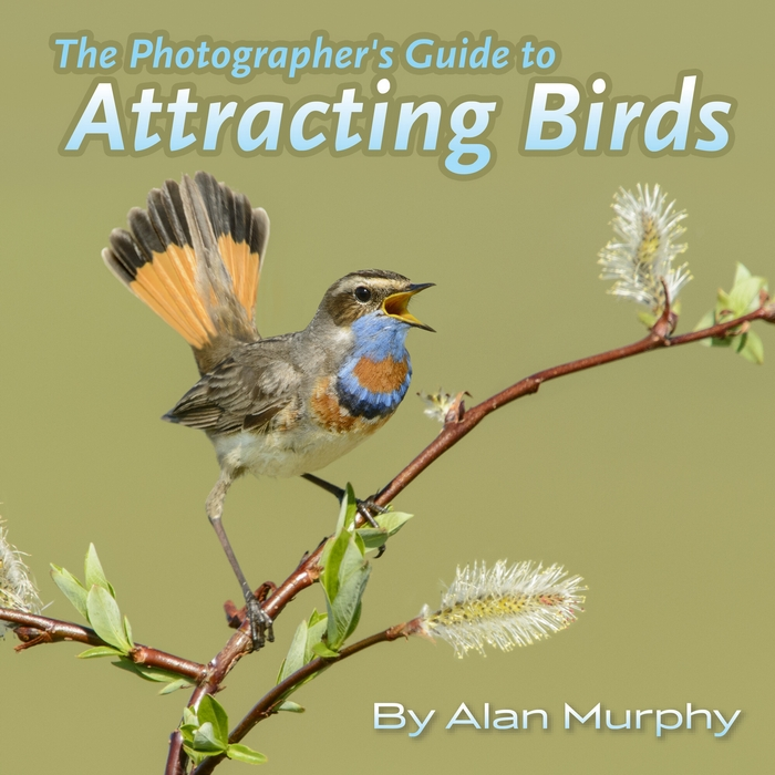 The Photographers Guide to Attracting Birds