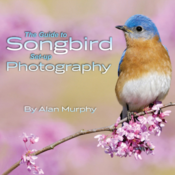 The Guide to Songbird Setup Photography